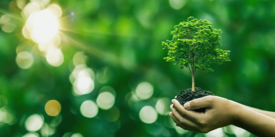 La Financière de l'Echiquier renforce son engagement en faveur de la biodiversité
